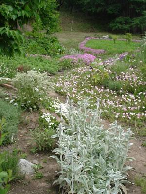 無農薬で育てられているハーブ園